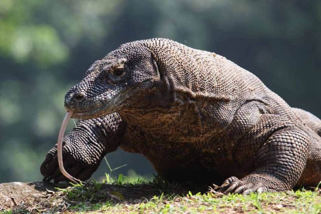 4 Days 3 Nights Komodo Fabulous Tours